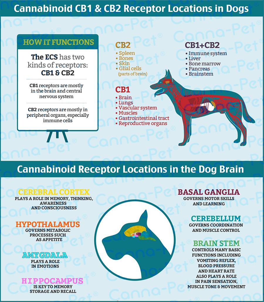 Medical Benefits Of Cannabinoids And Terpenes For Dogs
